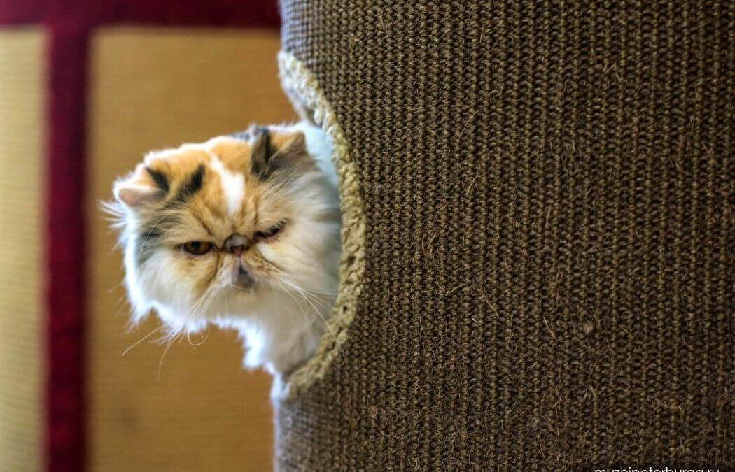 Маленькая «Республика кошек» в Питере – большие впечатления